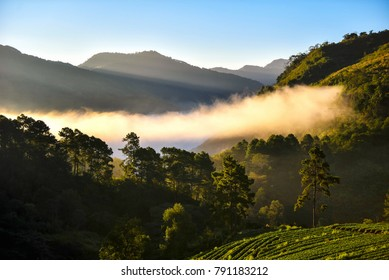 Background beautiful mountain in Thailand. Light morning mist the strawberry farm is Doi Ang Khang,Chiang Mai.