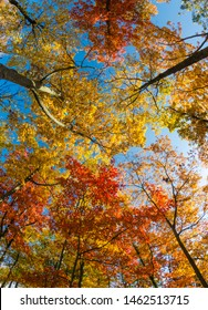 A background of beautiful multicolored trees in foliage shoot on a fisheye lens in the autumn against a blue sky.
