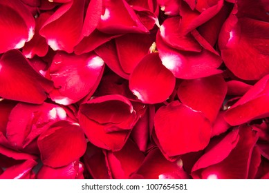 Background of beautiful natural red rose petals