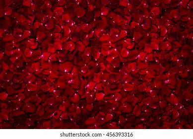Background of beautiful red rose petals