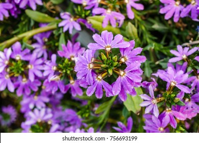 Background with beautiful wild flowers outside in the park at summer time. - Shutterstock ID 756693199