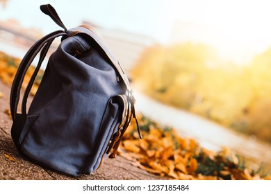 Background beautiful windy cold autumn warm season in river park garden with yellow red orange gold tourist bag backpack relax happy sightseeing in vacation holiday weekend sunrise sunset in europe