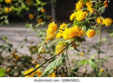 background of beautiful yellow flowers with a blurred phonemes