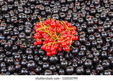 Background of the berries black and red currants. Photo Close-up