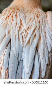 background bird feather. Large feathers of a large pelican as background for design. Selective soft focus