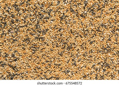 Background of  bird seed for finches, junco and siskins