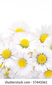 background of blooming daisies
