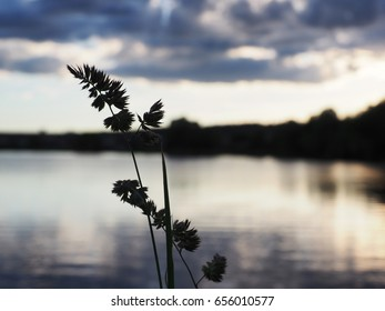 The background from blooming grass at the lake on the sunset.  The complex mixed image of the clouds and the water surface. The image for the decoration of a modern smart home.