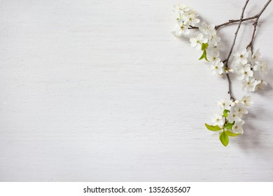 Background with blooming spring cherry plum branches