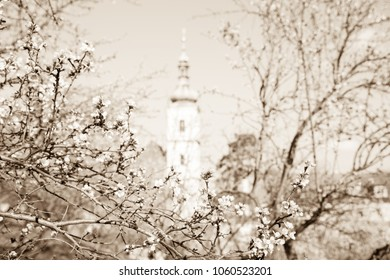 Background with blossoming almond trees. Sepia picture with blossoming almond. Sepia flowers. Landscape with church and flowers in sepia shades.
