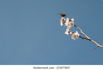 Background of blue sky and bumblebee. Wallpaper