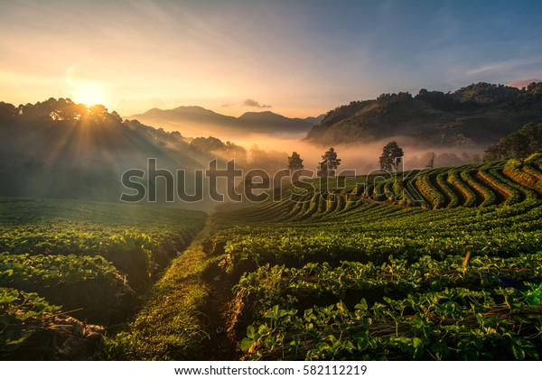 Background blur light morning with fog floating on the mountain and sky is a beautiful view the strawberry farm is Ang Khang Chiang Mai in Thailand.