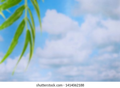 Background blur of a palm frond in front of a blue sky with puffy white clouds. Great image for any summer theme.