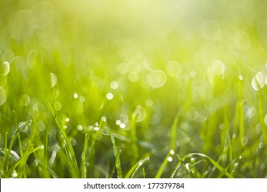 Background of blurred fresh green grass. Beautiful bright sunny spring morning. Abstract nature background with rounded pearl water-drops. Soft focus image.