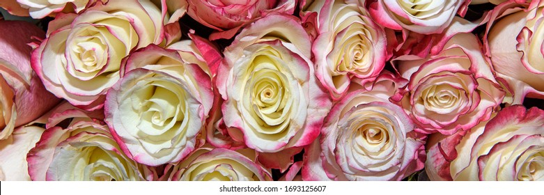 Background of bouquets of flowers. Roses. Design. Panorama. Close up.