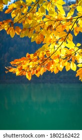 Background with a branch of autumn yellow leaves illuminated by the sun on the background of the lake