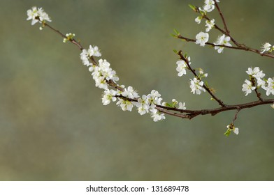 Background with branch of blossoming apple tree