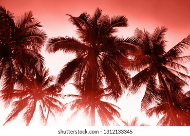 Background of the branches of tropical palm trees. Color of the year 2019 living coral
