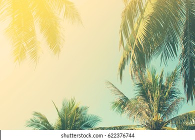 Background of the branches of tropical palm trees, the sky in vintage style. Toning