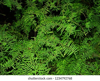 Background of bright green vegetation in Australia