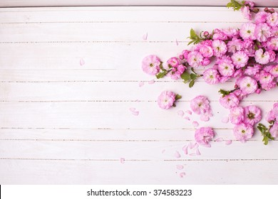 Hintergrund mit hellrosa Hintergrund   Blumen auf weißen Holzplanken. Selektiver Fokus. Platz für Text.
