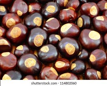 Background of Buckeye nuts