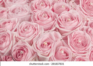 background of buds pink roses with pearls