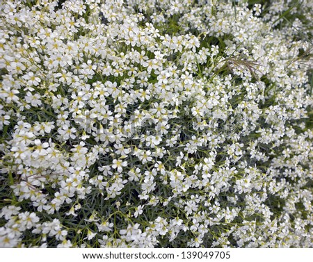 Background bushes white flowers spring stock photo edit now background of bushes of white flowers in spring mightylinksfo