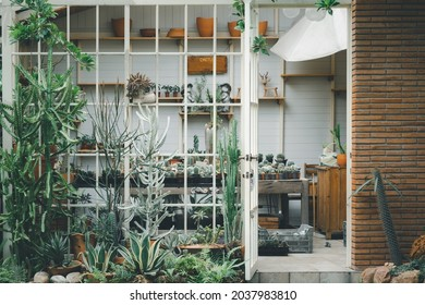 background of cactus glass green house hothouse plant nusery gardener outdoor interior front view entrance.
