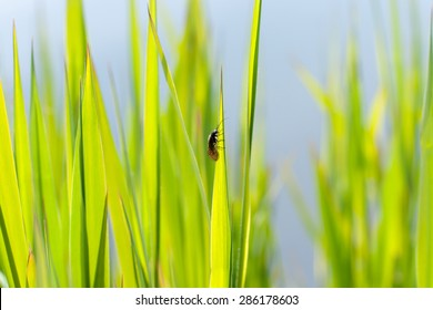 Background caddisfly