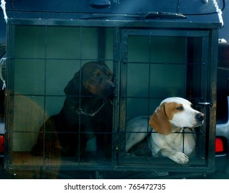 Background for fleecer,puppy's in a cage watching at something
