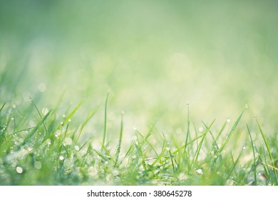background of close up of natural green grass sparkling with drops of rain with shallow depth of field