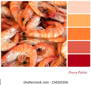 A background closeup of fresh prawns in a colour palette with complimentary colour swatches.
