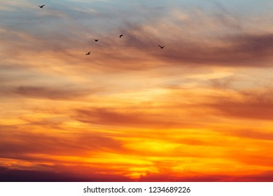 background of a cloudy sky, nature paintings, sunset in the sky, silhouette of a flock of birds flying to warm lands