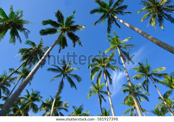 Background of coconut tree and sky.