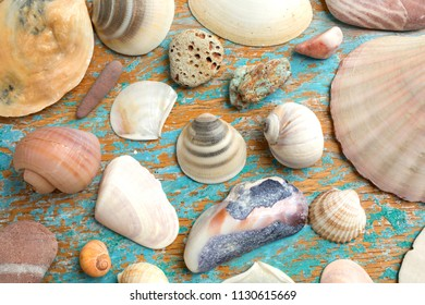 Background of a collection of seashells, starfish and rocks