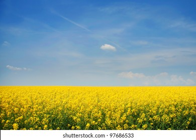 The background color of mustard.