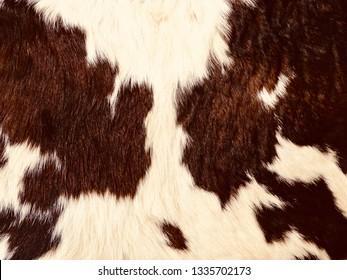 Background color photo of cowhide fur. Closeup of cow hair, cow skin brown and white, ready for texts and graphic. - image.