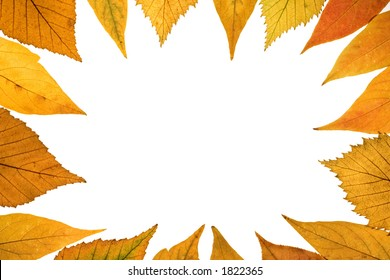 Background from colored fallen leafs
