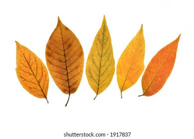 Background from colored fallen leafs 4
