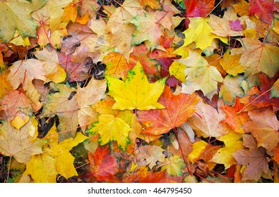 Background from colorful autumn leaves. Fallen leaves background.