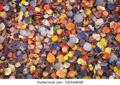 Background of colorful leaves. Autumn photo taken in the forest