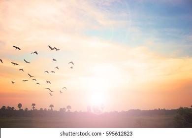 som är ASA från Schaharna av solnedgången dating 2015