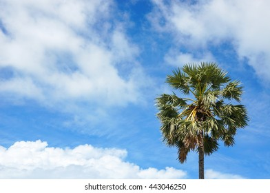 Background copyspace palm tree  with beautiful blue sky and white cloud
