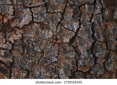 Background the cracked tree bark