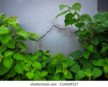 Background of Cracked Wall Texture and Green Plants