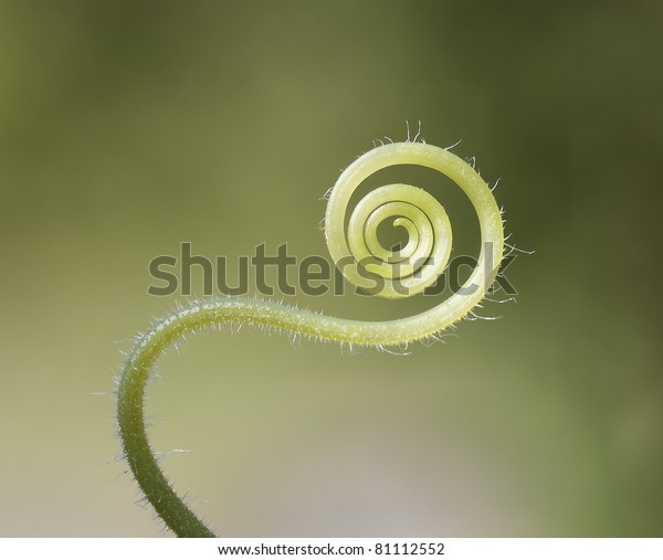 Background with cucumber tendril
