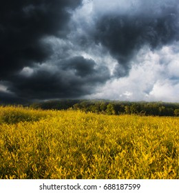 Background of the dark clouds before a thunder-storm and beautiful yellow field with wild flowers