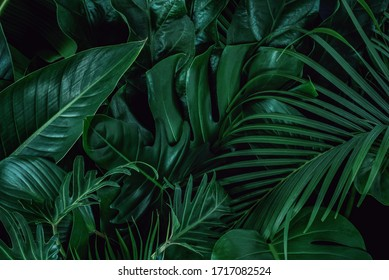 Background with dark green tropical leaves, fresh flat background. Flat lay. Nature concept