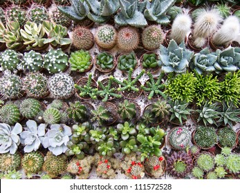 Background of different cactus